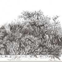 il giardino roccioso