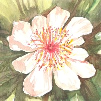wintage inspiration for this floral watercolour